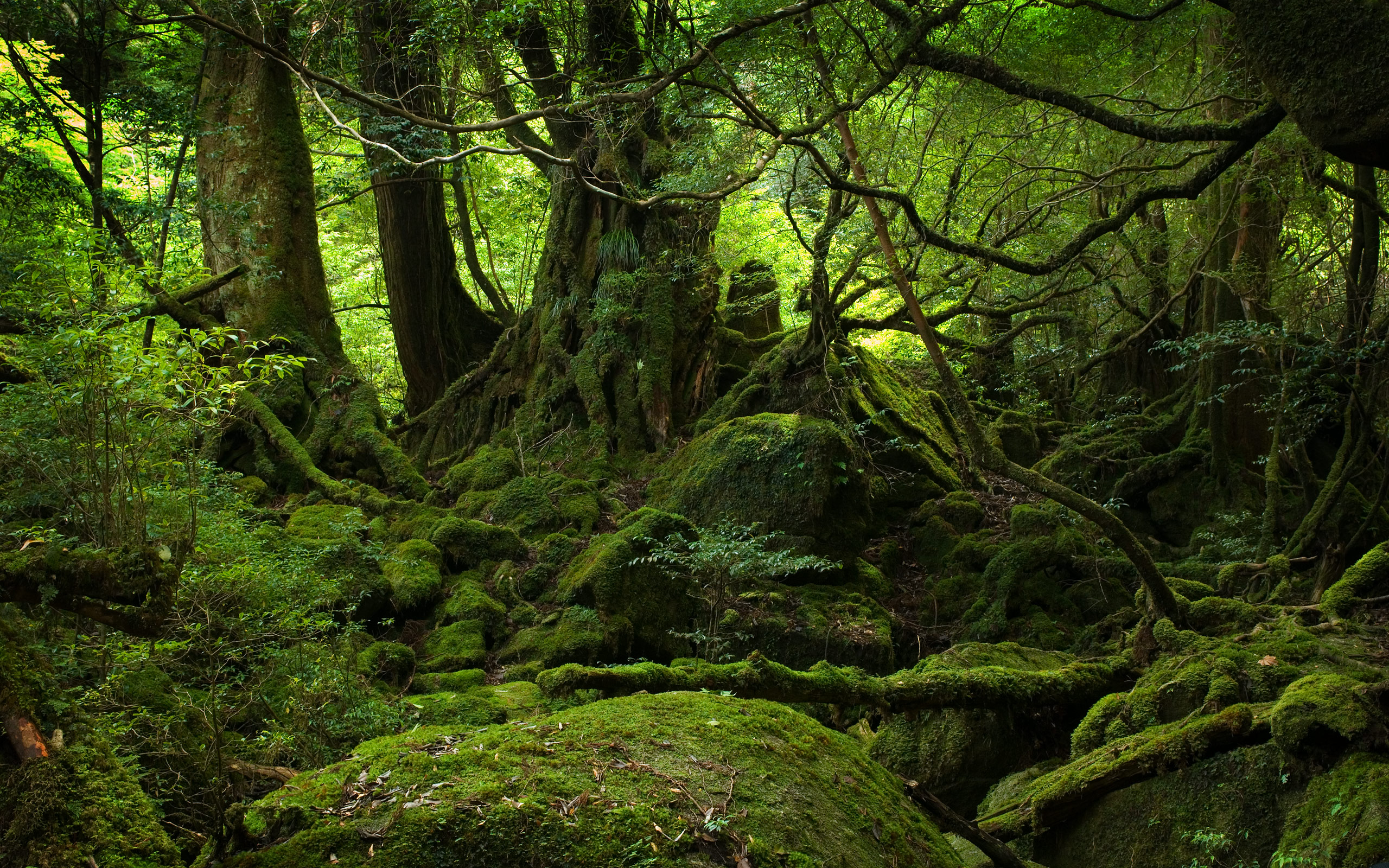Old Growth Forest